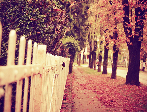 tumblr-photography-beautiful-i4